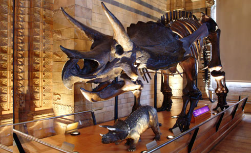 triceratops natural history museum london